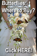 Click for Butterflies: Where To Buy?