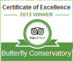 Trip Advisor 2013 Certificate of Excellence